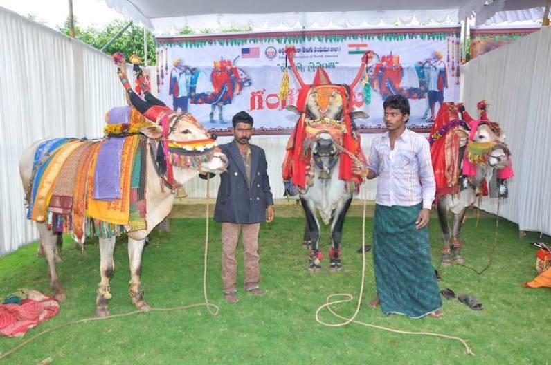 Gangireddulu